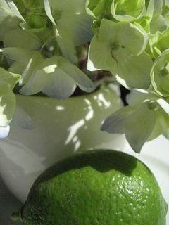Hydrangea + lime